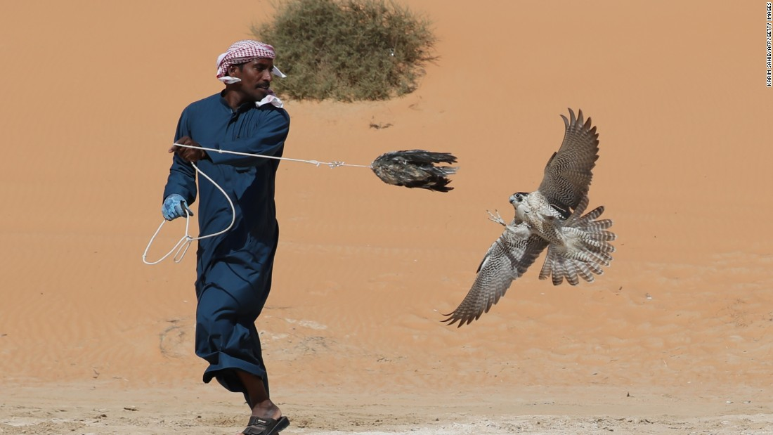 "Falconers spend around six weeks training their birds to catch prey, according to <a href=""https://twitter.com/NasifKayed"" target=""_blank"">Nasif Kayed</a> from<a href=""http://thearabculturalist.com/"" target=""_blank""> The Arab Culturalist</a>."