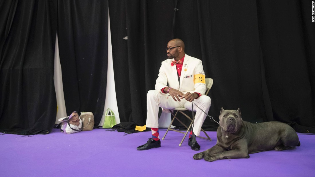 Lenard Clayton and Zues, a cane corso, wait for their turn to compete.