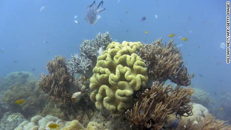 """""""Tote Korallen bringen keine Babys"""": Das Great Barrier Reef verliert seine Fähigkeit, sich vom Bleichen zu erholen"""
