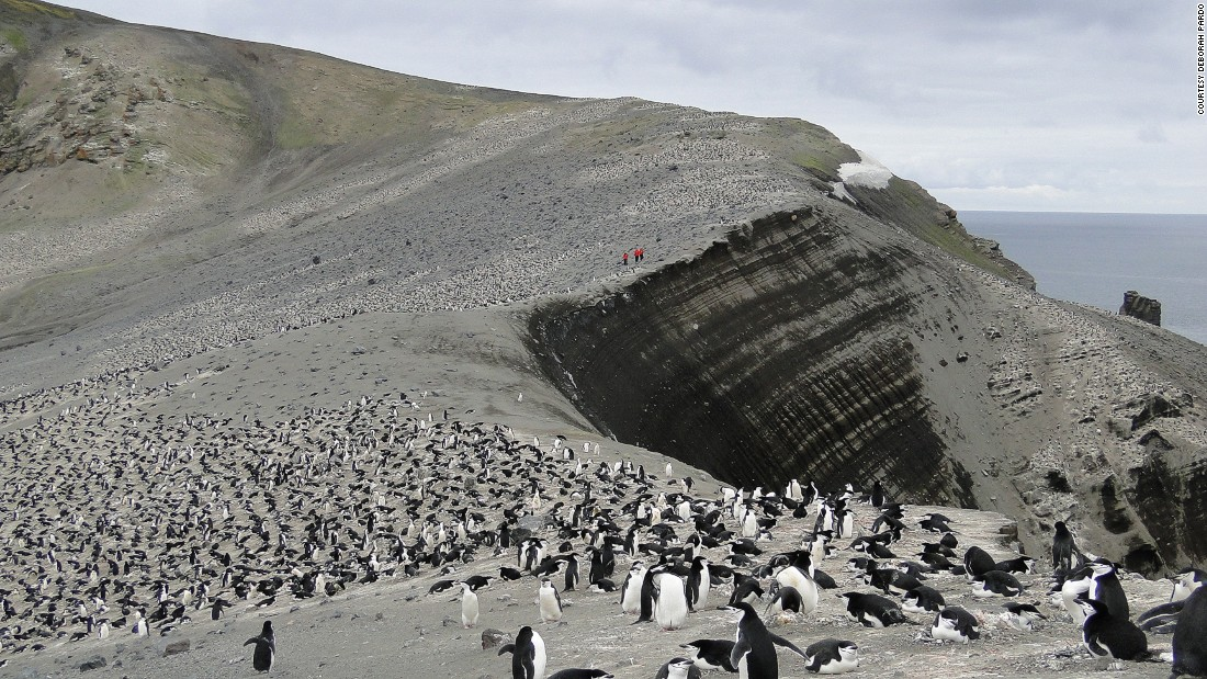 "On Deception Island, Pardo fondly remembers the ""highways of penguins"" following one another along certain paths. It's easy to tell which direction they're going depending on whether their black or white side is visible, she explains."