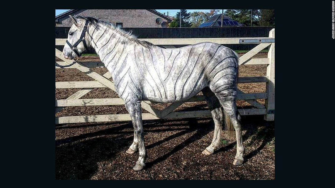 """My first full body custom was the zebra clip on my little Welsh pony,"" Scott recalls. ""It helped him stay cool enough not to sweat during work, but also not to be too chilly during warm up/ cool down phases of exercise."""