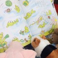 04 stuffed animals reading