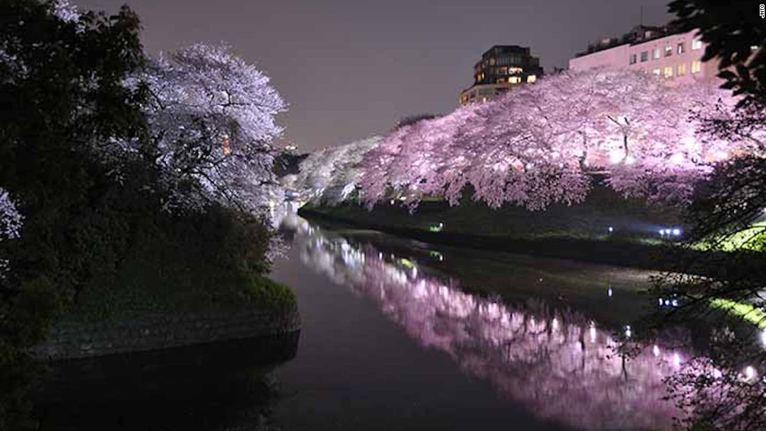 sakura season guide to japans cherry blossoms cnn travel - Japanese Garden Cherry Blossom Paintings