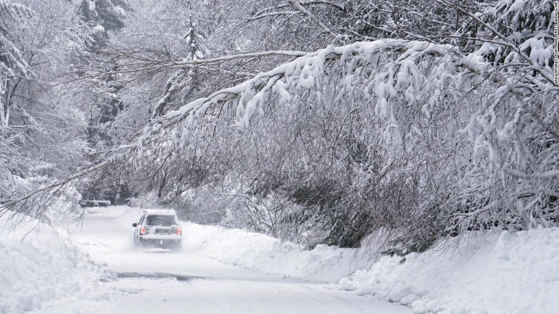 A car drives past a birch tree weighed down by wet snow Thursday, February 16, in Kennebunk, Maine.