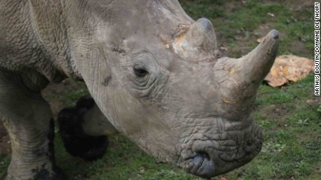 The two others white rhinos living in Thoiry escaped the massacre and are safe.