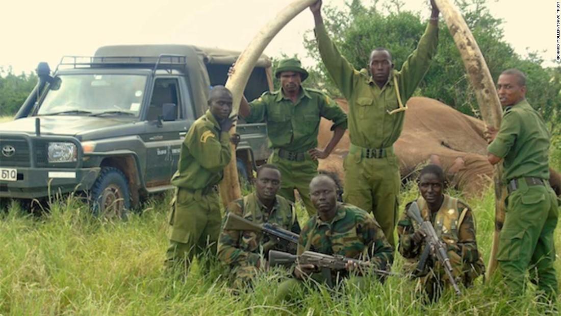 Poachers kill rare giant tusker elephant in Kenya