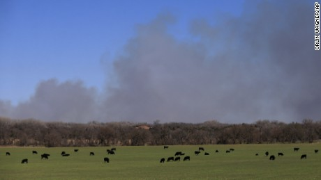 Cattle graze with a background of smoke from wildfires near Hutchinson, Kansas, Tuesday.