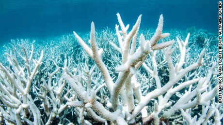 Documentation of the Great Barrier Reef near Port Douglas from Greenpeace Australia Pacific, shows damage of coral. This is the result of 12 months of above average sea temperatures across the Reef.