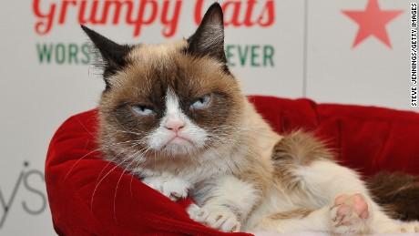 """Chat grincheux apparaît chez Lifetime """"Le pire Noël de tous les temps de Grumpy Cat"""" à Macy Union Square en 2014 en Californie."""