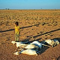 Boy dead goats drought