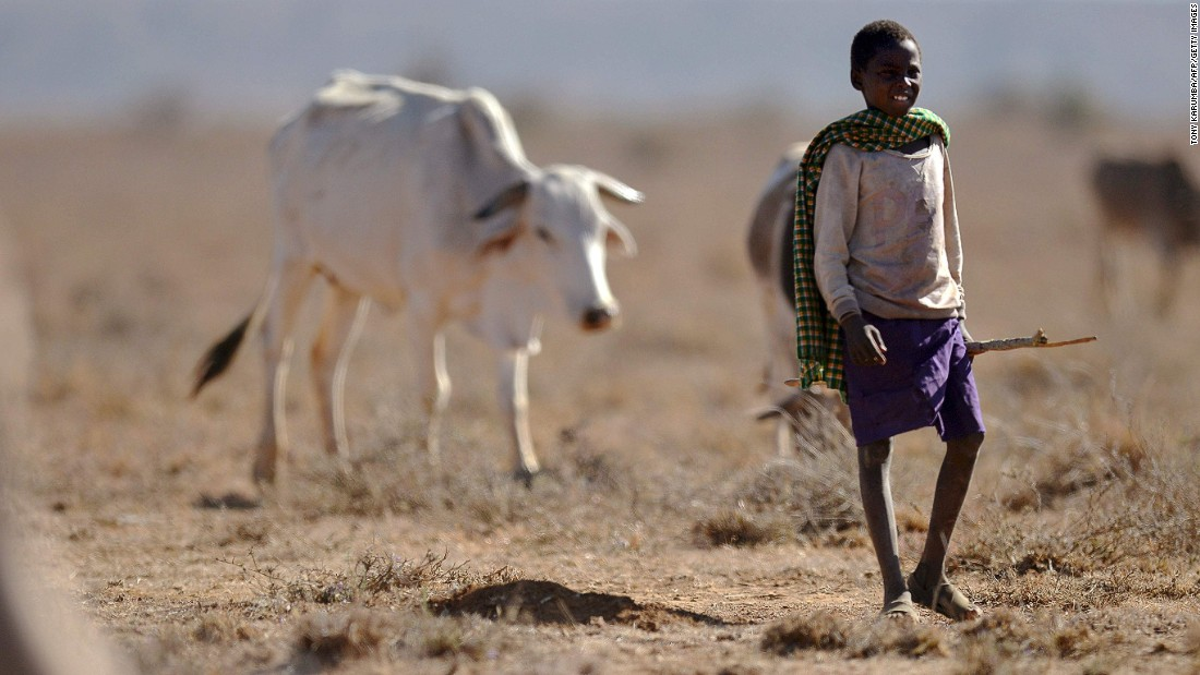 A young herder from the Samburu pastoral community in Kenya grazes his family cattle on the dwindling pasture on the plains of the Loisaba wildlife conservancy, where controlled livestock grazing from surrounding manyattas (Samburu settlements) is helping mitigate conflict over increasingly scarce water and pasture during a biting drought season.
