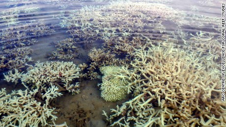 Extensive coral bleaching in the Kimberley Region of the Great Barrier Reef as seen in early 2017.
