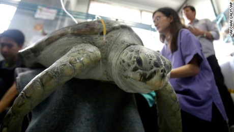 The 25-year-old green sea turtle was treated by vets at the Chulalongkorn University in Bangkok.