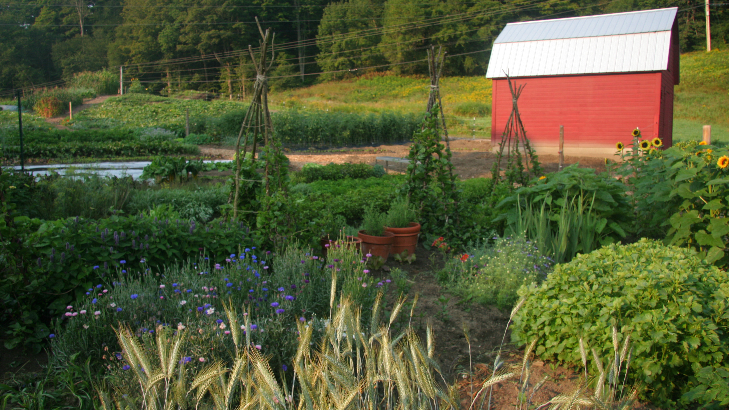farm to hotel 10 resorts that grow their own food cnn travel