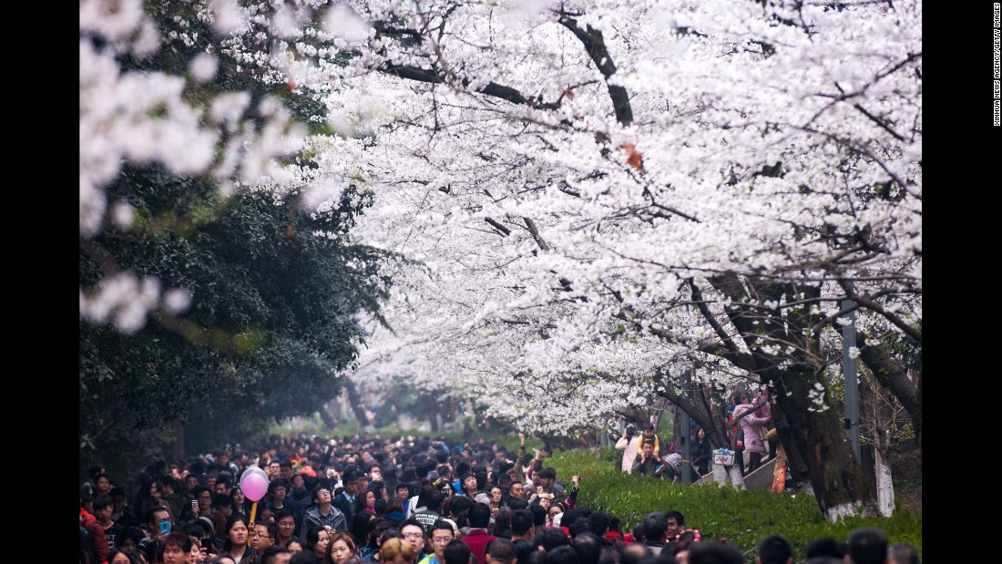 <strong>Wuhan, China: </strong>People view springtime cherry blossoms at Wuhan University in central China's Hubei Province.