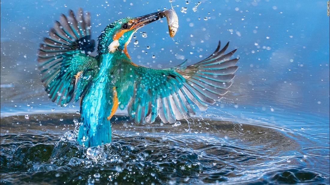 Sony World Photography Awards 2017: Winning Photos