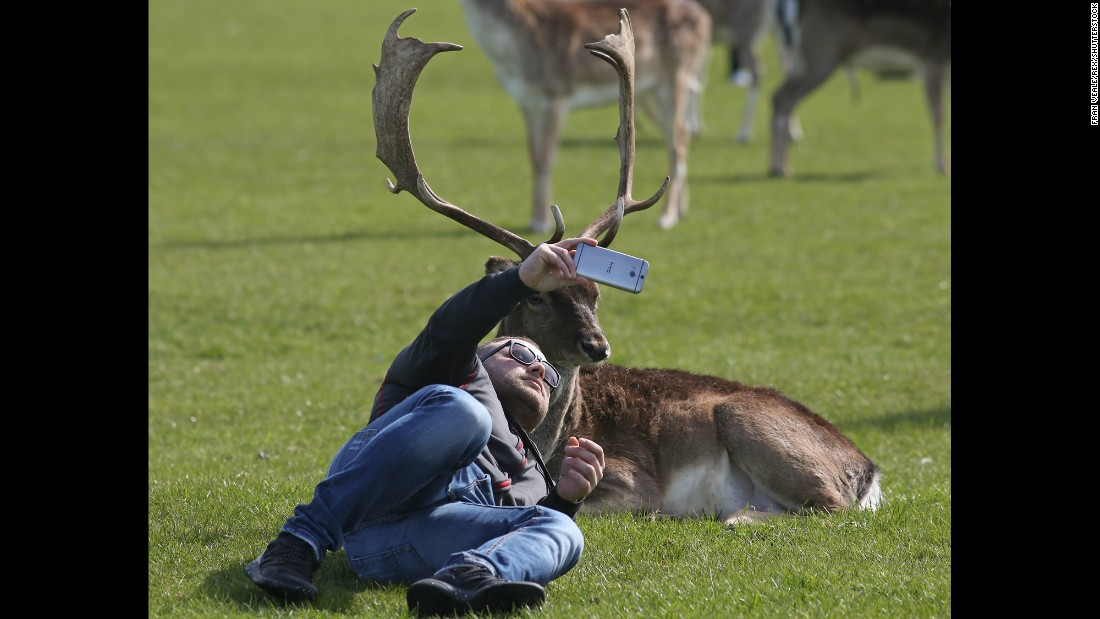 A man in Dublin, Ireland, takes a photo with a deer at Phoenix Park on Sunday, March 26.