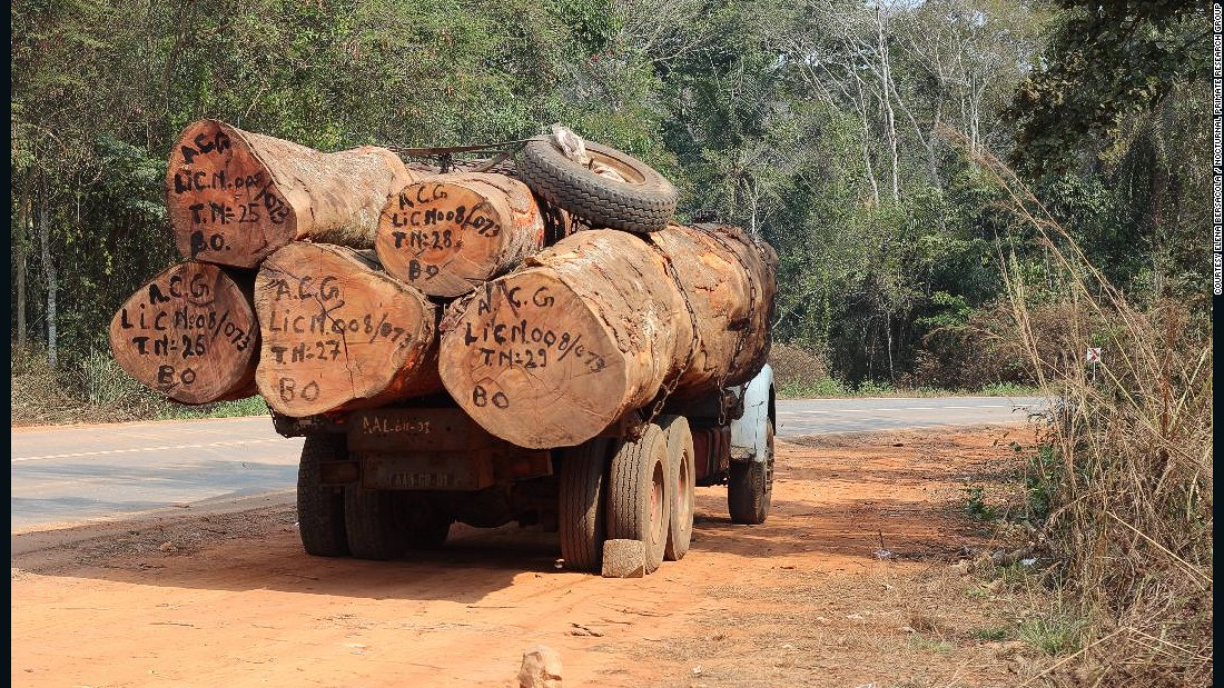 "Increased logging and agricultural activity is contributing to habitat loss, the researchers say. ""Wherever we went, we met logging trucks,"" says Svensson."