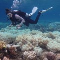 01 great barrier reef bleaching
