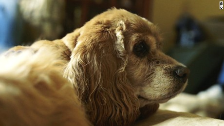 Homeless, terminally ill dogs find sanctuary