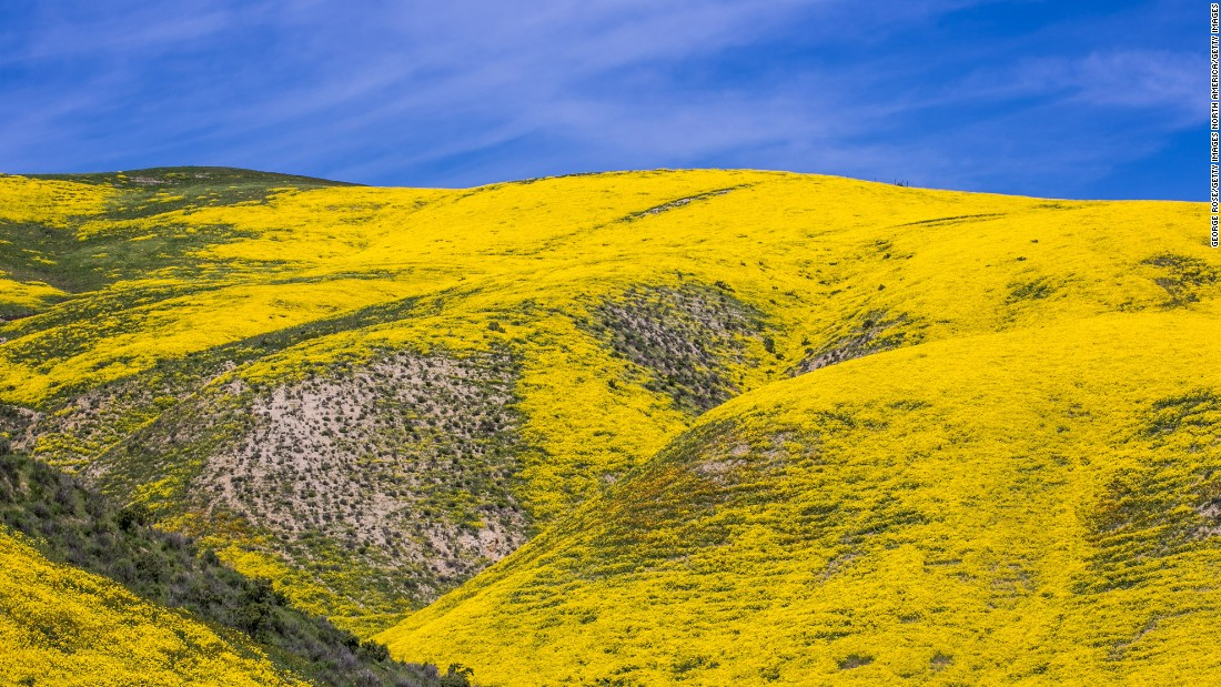 "<strong>San Luis Obispo, United States:</strong> The Golden State has been even more golden this spring, as areas throughout California (like this valley on the eastern border of San Luis Obispo) are covered in a wildflower ""superbloom."""