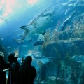 dubai mall shark tank