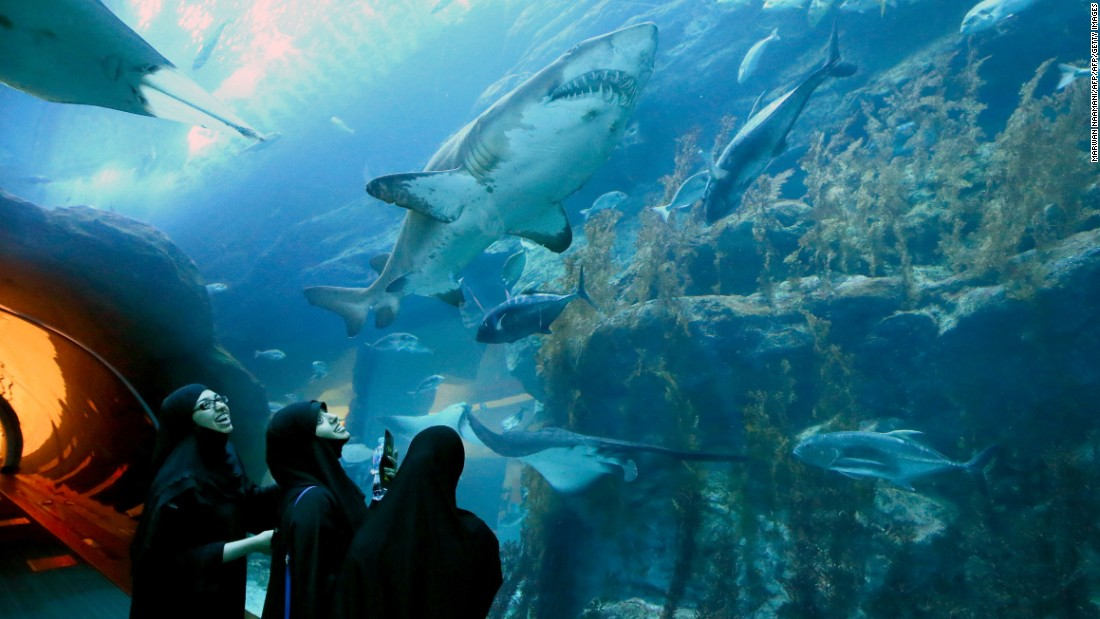 "Visit the Dubai Mall and guests have the option to dive with the Dubai Aquarium and Underwater Zoo's resident sharks. Divers have the option to hop on a ""<a href=""http://www.thedubaiaquarium.com/en/Explore/AquaticExperiences/Shark-Scooter.aspx"" target=""_blank"">Shark Scooter</a>,"" so you can spend less time swimming and more time cruising in the deep."