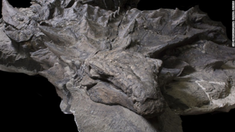 Lifelike dinosaur fossil makes public debut