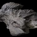 [Image: 170514180736-royal-tyrrell-museum-nodosaur-small-11.jpg]