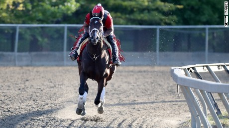 Classic Empire is one of the main challengers to Always Dreaming for the Preakness Stakes.