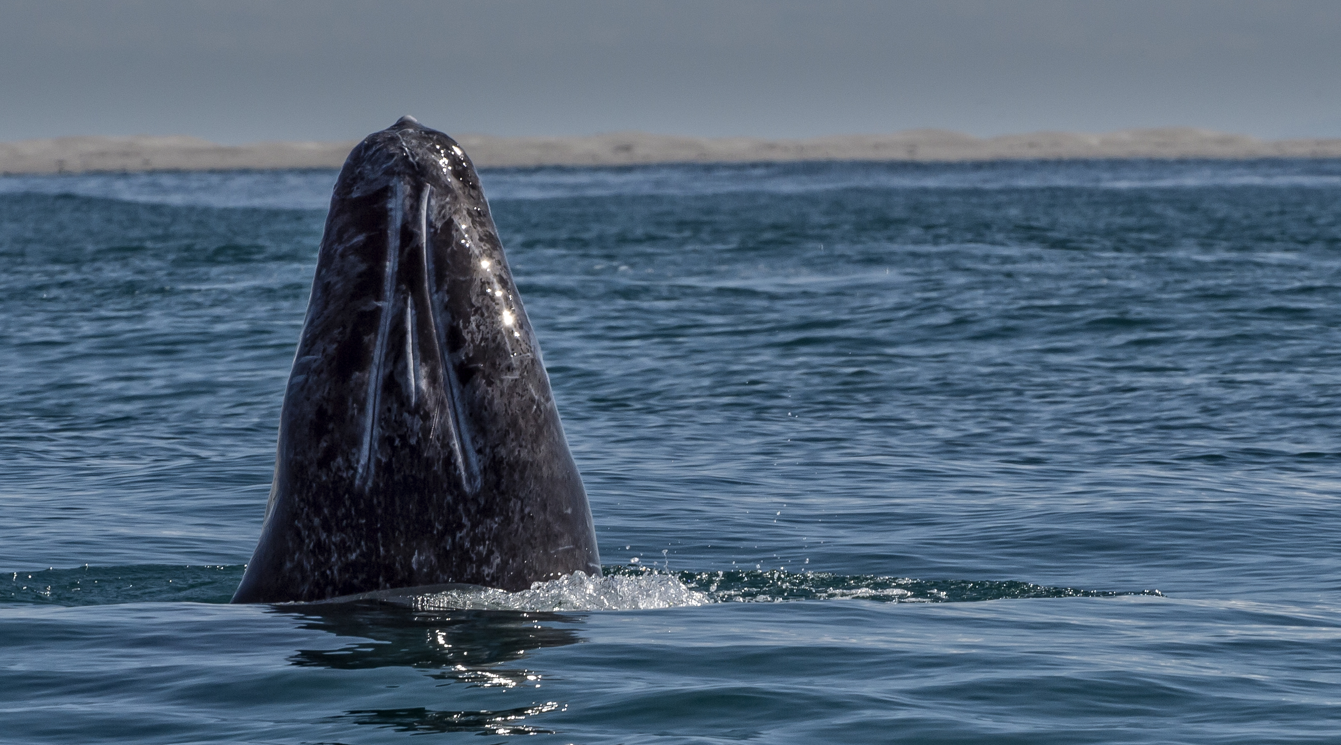 whale watching sites best places around the world cnn travel