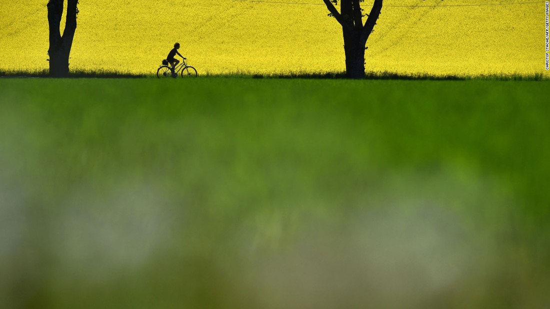 "A cyclist rides past a flowering rapeseed field not far from the German village of Schongeising on Wednesday, May 17. <a href=""http://www.cnn.com/2017/05/11/world/gallery/week-in-photos-0512/index.html"" target=""_blank"">See last week in 28 photos</a>"