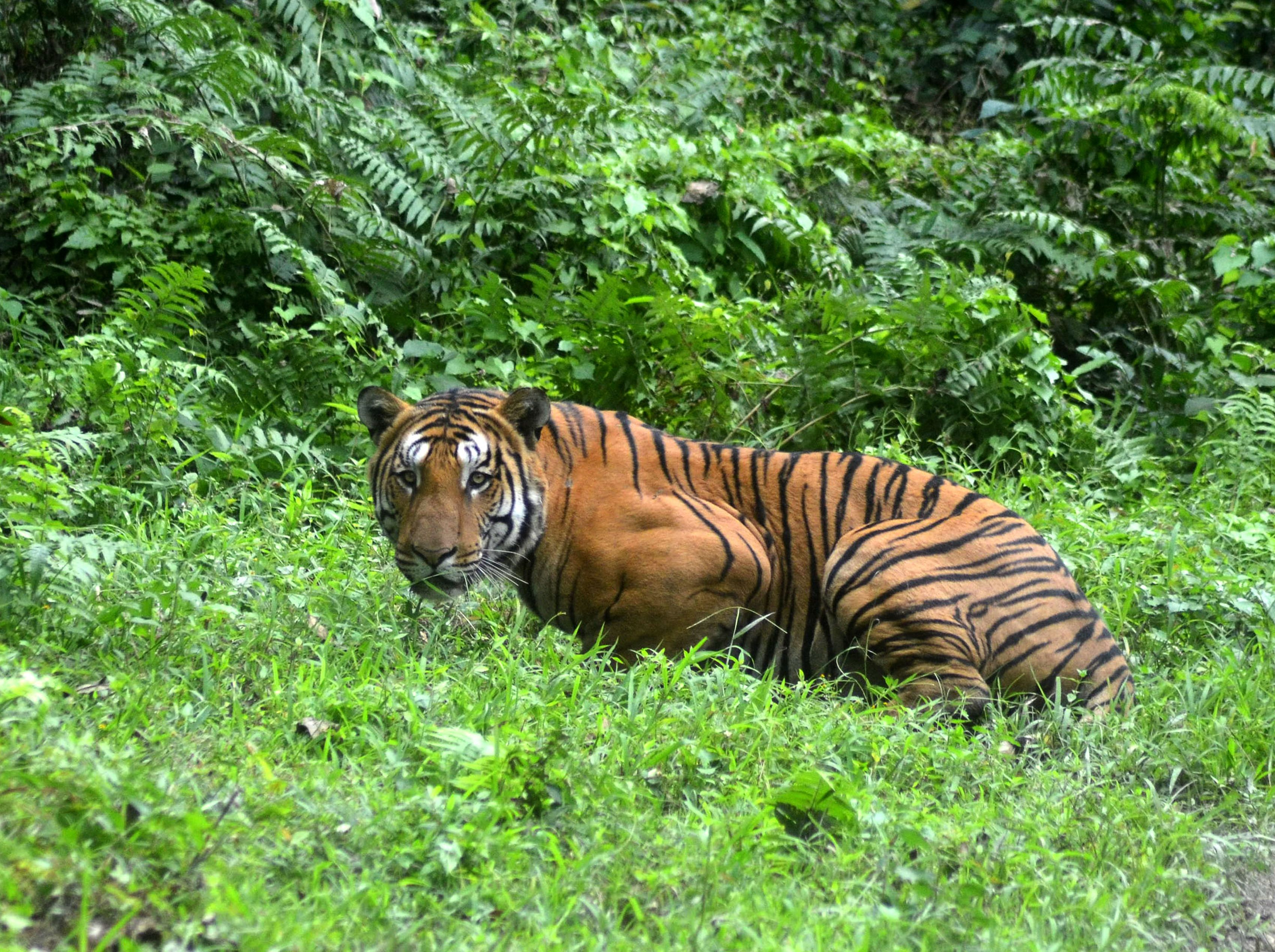 Tigers in India: 5 best places to see one | CNN Travel