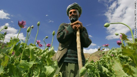 "PANSHAR, AFGHANISTAN - MAY 29: Poppy farmer Abdul Rassod poses as he looks over at his field May 29, 2005 in Panshar, in the Badakhshan district in the northeast of Afghanistan. Abdul has been growing poppies for five years and receives 50% of the harvest. Afghanistan, the world's largest producer of opium and heroin, launched the first survey of drug abuse among its own population. The country produced 90 percent of the world's opium which is refined into heroin for sale in many parts of the world. U.N. experts have warned that the country is turning into a ""narco-state"" less than four years after the fall of the Taliban. President Hamid Karzai recently came under fire during his visit with President Bush for his record in fighting the war on drugs. (Photo by Paula Bronstein/Getty Images)"
