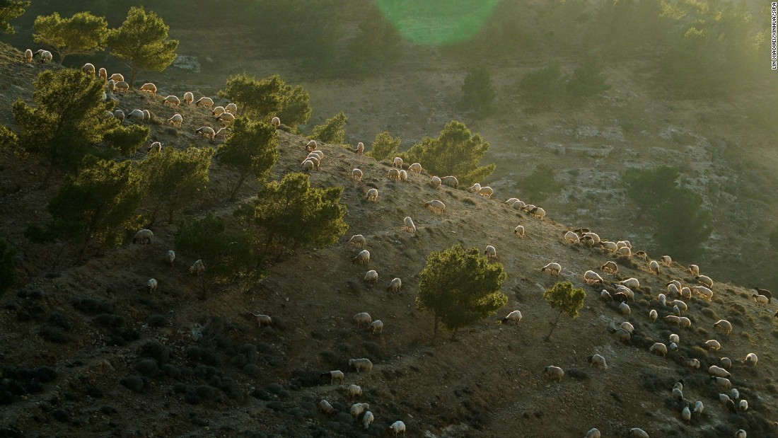 <strong>Madaba Governorate, Jordan: </strong>A flock of sheep are seen during sunset on a hillside in Madaba Governorate, Jordan.
