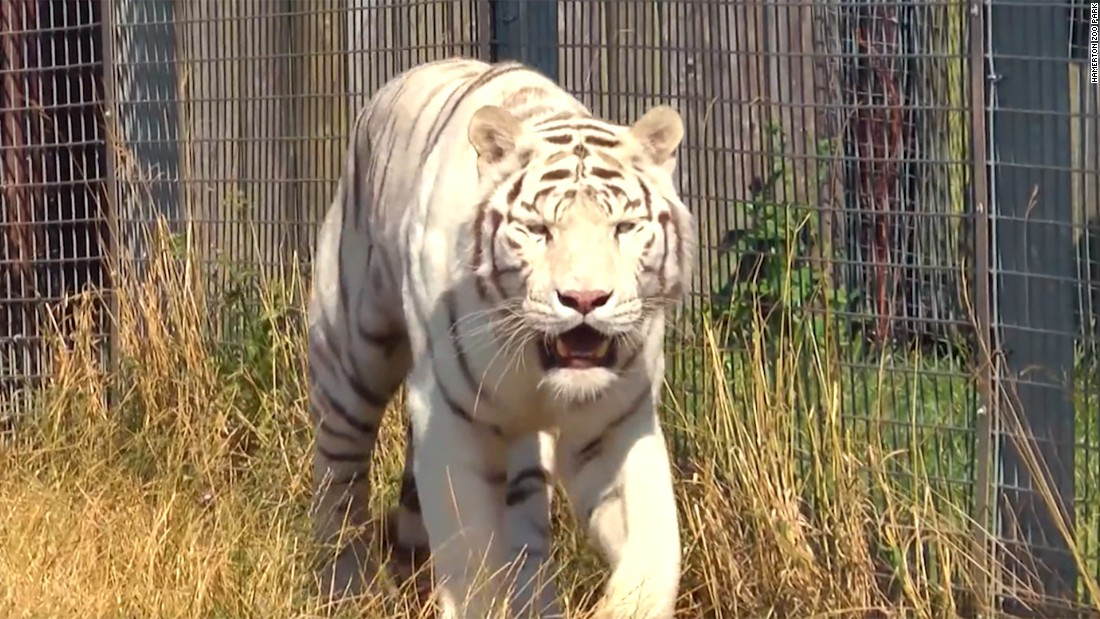 Tributes paid to zookeeper killed by tiger