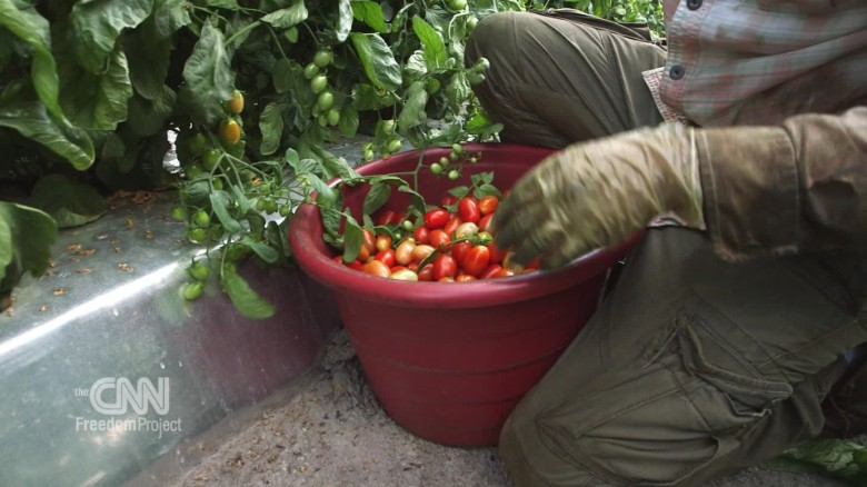 Workers Fight For Rights At Ground Zero For US Slavery CNN - Map of tomato purchases in us