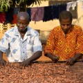 tony's chocolonely sorting beans