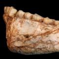 [Image: 170606123847-04-homo-sapiens-fossils-small-11.jpg]