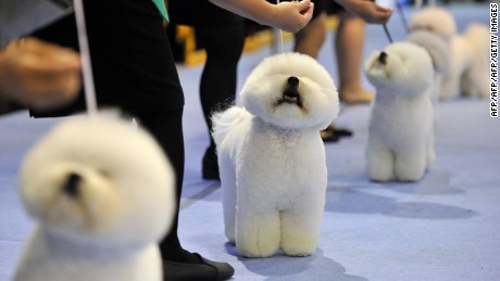 South Korea's new presidential pooches, and why they matter