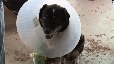 Duke suffered a broken leg and a damaged retina, but is expected to make a full recovery.