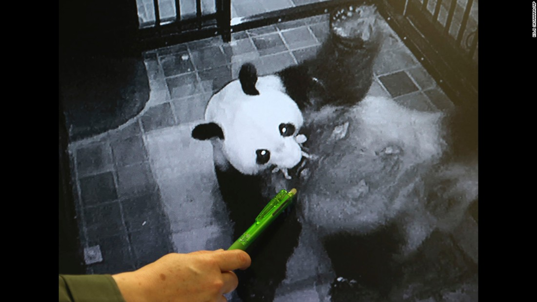 "A Ueno Zoo employee points at an image of giant panda Shin Shin holding her newborn cub in her mouth on Monday, June 12. It's the Tokyo zoo's <a href=""http://money.cnn.com/2017/06/12/investing/tokyo-baby-panda-stocks/index.html"" target=""_blank"">first panda birth in five years.</a>"