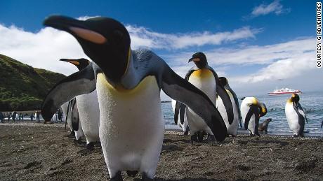 wildlife encounters Antarctica South Georgia Penguin Close up-Leo Tamburri 2010-IGP1312 Lg RGB