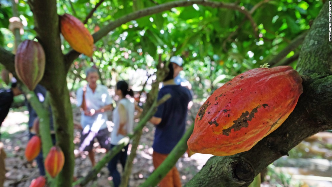 The brewers reach for everything from locally made Marou chocolate (cacao plants pictured) to Dalat coffee, passion fruit, cacao  and even divisive durian -- a spiky Asian fruit with a distinct smell.