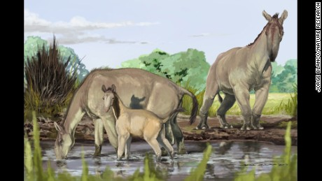 DNA solves ancient animal riddle that Darwin couldn't