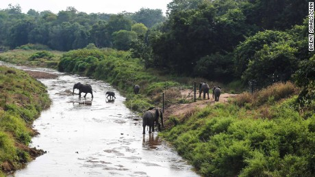 Six  newly-transported elephants venture out into their new home, Nkhotakota National Park.