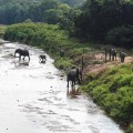14 cnn Malawi elephants