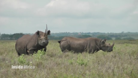 Inside Africa How microchips are saving Kenya's Black Rhinos B_00062118