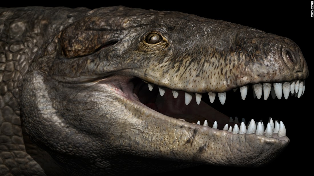 "Razanandrongobe sakalavae, or ""<a href=""http://www.cnn.com/2017/07/04/world/giant-crocodile-razana-study/index.html"">Razana</a>,"" was one of the top predators of the Jurassic period in Madagascar 170 million years ago. Although it looks different from modern-day crocodiles and had teeth similar to a T. rex's, Razana was not a dinosaur but a crocodile relative with a deep skull."