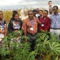 cassava scientists